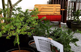 SBC Group Cultivates Community with Edible Sky Gardens for Condominium Residents